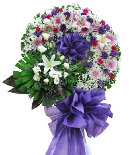 hoa H6
